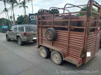 Policial del Estado aseguran animales en Etzatlan, San Juan Lagos, Lagos de Moreno y Vallarta. - Tala Jalisco Noticias