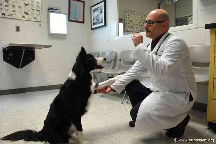 Study highlights factors that predict success for treating canine behavioral disorders