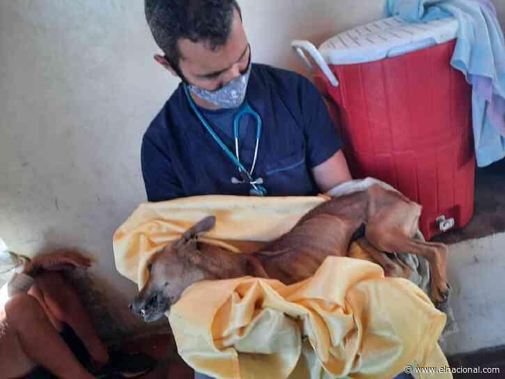 Detuvieron a un actor de Radio Rochela por mantener desnutridos a animales para rituales de santería
