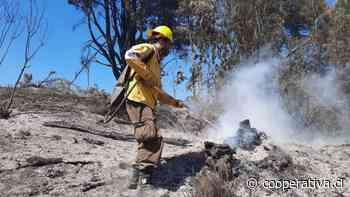 Biobío: Declaran alerta roja por incendio forestal que amenaza a la Reserva Nacional Ralco