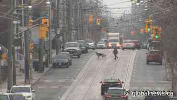 Toronto traffic data shows people are spending more time at home during COVID-19 lockdown
