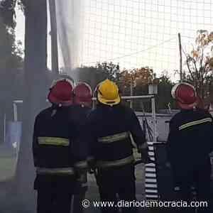 Insólito: una cotorra ocasionó un incendio en General Pinto - Diario Democracia