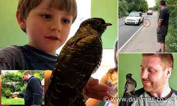 Garden designer nurses injured bird back to health in his bathroom after rescuing it from the road