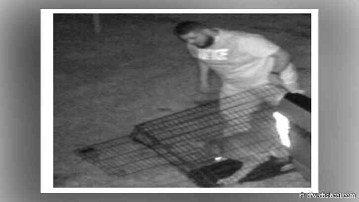 Man Wanted After Being Caught On Camera Abandoning Dog In Dallas