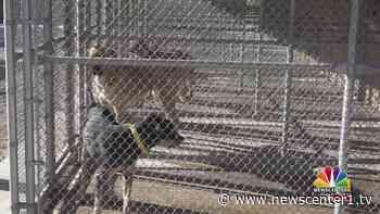 Whitewood dogs ready for adoption - KNBN NewsCenter1 - Newscenter1.tv