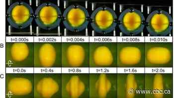 It's no yolk — egghead experiment simulates concussion