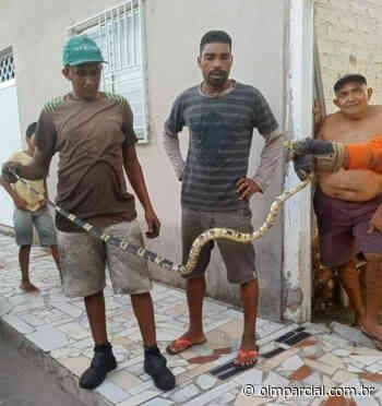 Cobra é resgatada pelos bombeiros em Chapadinha - O Imparcial