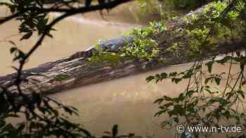 Noch rund 20 frei lebende Tiere: Seltenes Siam-Krokodil tappt in Fotofalle