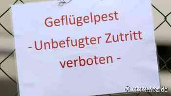 """Geflügelpest in der Gemeinde Ganderkesee """"ein herber Schlag ins Kontor"""" - noz.de - Neue Osnabrücker Zeitung"""