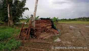 Autoridades incautaron más de mil listones de madera en Puerto Concordia, Meta - Extra Palmira