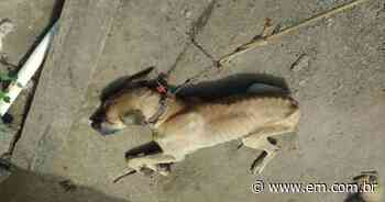 Polícia Civil prende suspeito de maus-tratos a cão em Mateus Leme - Estado de Minas