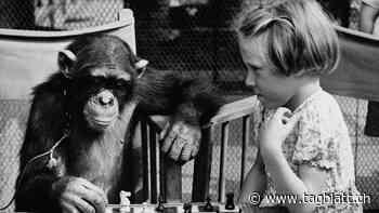 Literatur: US-Kultschriftsteller T.C.Boyle wird in seinem neuen Roman zum virtuosen Schimpansen-Versteher | St.Galler Tagblatt - St.Galler Tagblatt