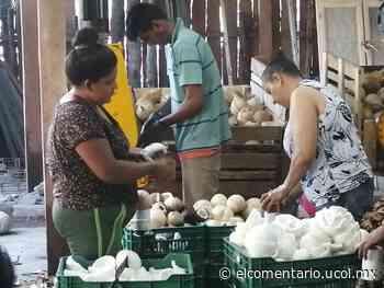 Repunta el precio de la pulpa de coco; oscila entre los 20 y 22 pesos por kilo - El Comentario