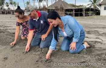 Preside Elsa Radillo liberación de tortuguitas en la playa de Mezcala - Quadratín Michoacán