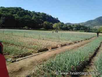 Constatan desarrollo de la Agricultura urbana en Guama autoridades del territorio santiaguero - tvsantiago - El sitio web de la televisión en Santiago de Cuba
