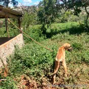 Homem é preso em Sarzedo por deixar cão amarrado sem água e comida para morrer - Hoje em Dia