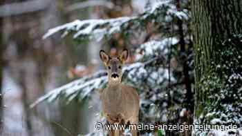 Jäger appellieren an Ausflügler: Störung kann lebensgefährlich für Wildtiere sein