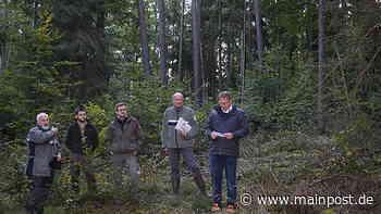 Eckartshausen 13.10.2020 Maroldsweisach: Dem Wald hilft nur monatelanger Dauerregen - Main-Post