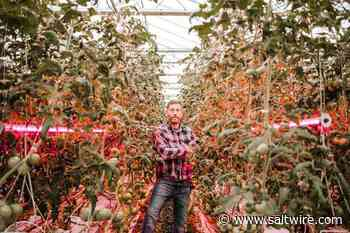 Lawrencetown greenhouse operation steadies cash flow by letting its light shine - SaltWire Network