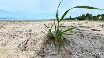Auswirkungen von Hitzewellen: Deutschland leidet stark unter Extremwetter