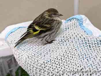 SPCA warns of bird-feeder Salmonella transmission