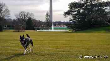 Champ, Major und eine Katze?: Bidens bringen Schäferhunde ins Weiße Haus