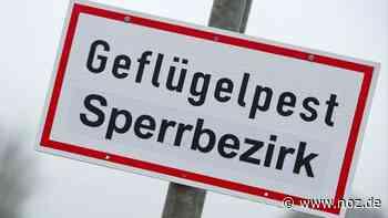 Neuer Ausbruch der Geflügelpest in Ganderkesee - noz.de - Neue Osnabrücker Zeitung