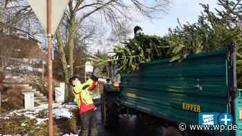 Netphen: CVJM sammelt Weihnachtsbäume in Dreis-Tiefenbach - WP News