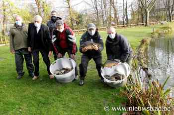 Motevissers zetten 500 kilo karpers uit - Het Nieuwsblad