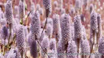 Haarschöpfchen: So ziehen Sie die Pflanze im Vorfrühling vor