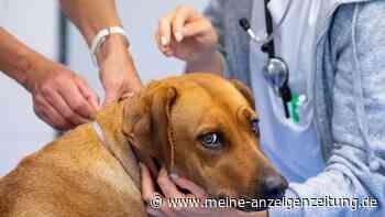 Nach Autounfall: Hund bekommt 20.000 Euro Schadenersatz – dafür gibt's das Geld