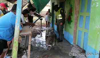VIDEO: Rescatan caimán que atemorizaba a la comunidad de Cimitarra - Caracol Radio