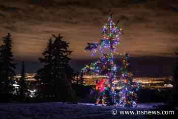 Vancouver man continues to light up trees on North Shore mountains to share 'unexpected joy' - North Shore News