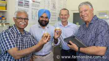 Research to improve quinoa palatability