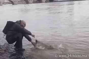 Pescan un enorme bagre en el centro de París (+video) - 24 HORAS