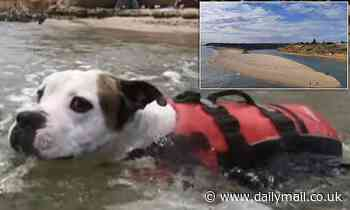 Hero dog saves boy from drowning at Port Noarlung South Australia