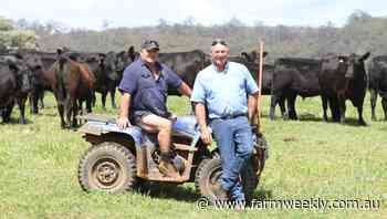 A switch to Angus for easy care cattle