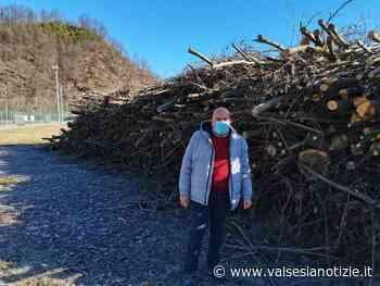 Crevacuore, pulizia degli alvei al termine: raccolti oltre 500 quintali di legname - valsesianotizie.it