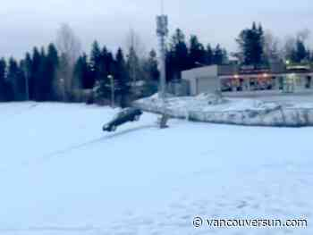 Viral video: Prince George RCMP seek driver who pulled off 'dangerous' aerial stunt at high school