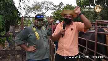 Control sanitario para el ganado en Tonosí - Telemetro