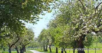 Natur : Bald blühen in Gusenburg noch mehr Obstbäume - Trierischer Volksfreund