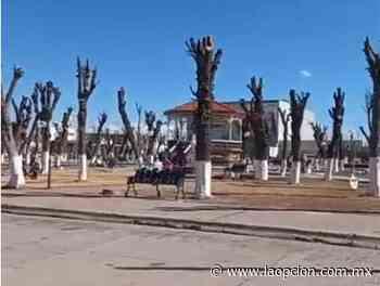 Irrita poda de árboles a ciudadanos en plaza de ascensión - La Opcion