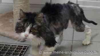 Verlassene Katze musste sterben - trauriges Schicksal bewegt die Menschen