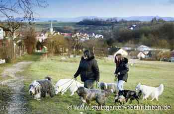 Tierliebes Paar in Aichtal - Sind sieben Hunde in einer Wohnung zu viel? - Stuttgarter Nachrichten