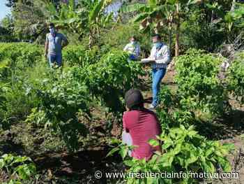 Monitorean presencia de menores en áreas agrícolas del distrito de Alanje - Chiriquí - frecuenciainformativa.com