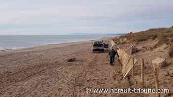 ACTUALITÉS : SERIGNAN - Notre précieux cordon dunaire : Hérault Tribune - Hérault-Tribune