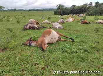 Raio mata 25 cabeças de gado em Ouro Preto do Oeste, RO - Alan Alex