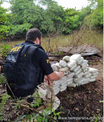 Carga de skunk é apreendida em Santo Antonio da Platina, no interior do Paraná - Bem Paraná