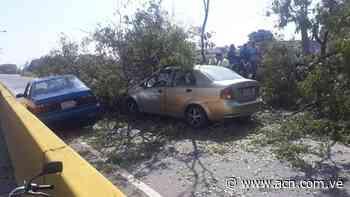 Cerrada autopista sentido Tocuyito por caída de un árbol - ACN ( Agencia Carabobeña de Noticias)
