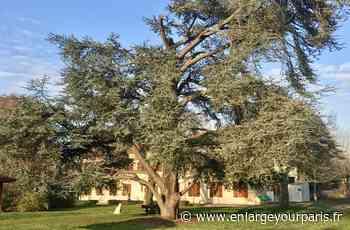 Société A Montesson, un arbre pour incarner une vision du soin par la nature - enlargeyourparis.fr